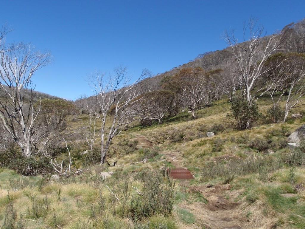 Walking along the Thredbo River Valley