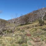 Walking along the Thredbo River Valley (83629)