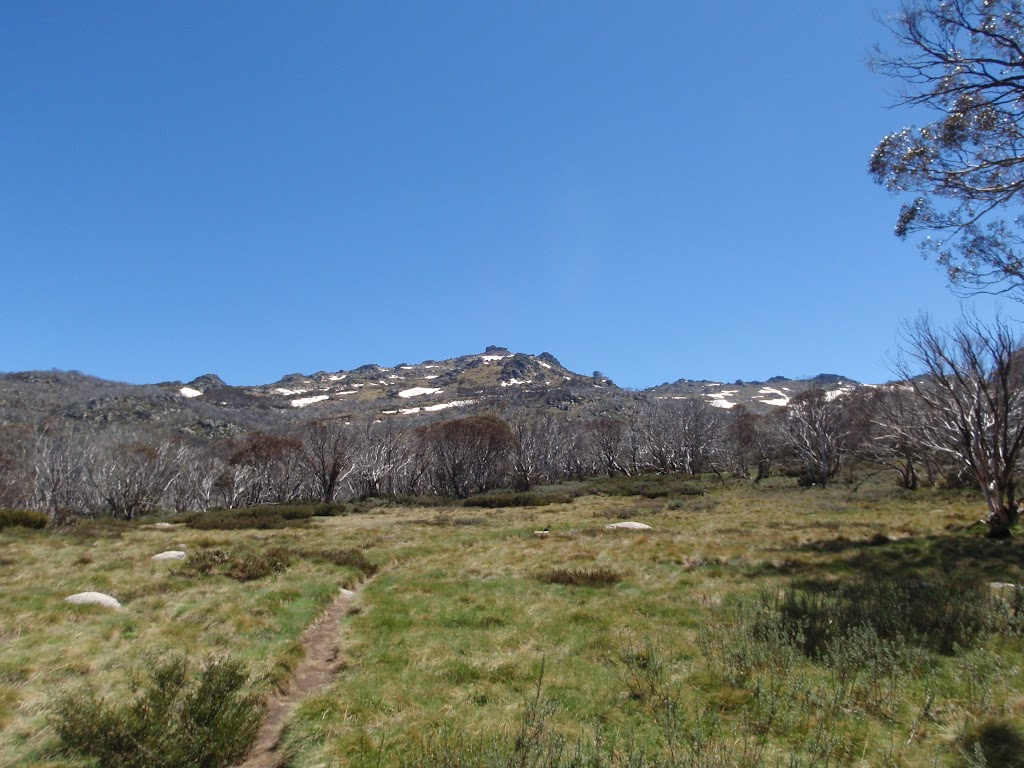 Open flat area on the Dead Horse Gap track at about 1700m AMSL
