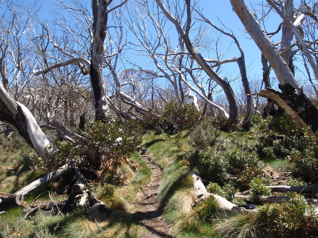 winding through the snowgums