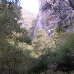 Part of the cliffs surrounding the Jenolan River (8825)