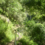 Going down to the Jenolan River (8864)