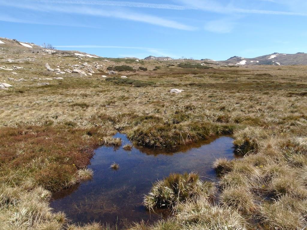 Small bog