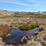 Small bog (88858)
