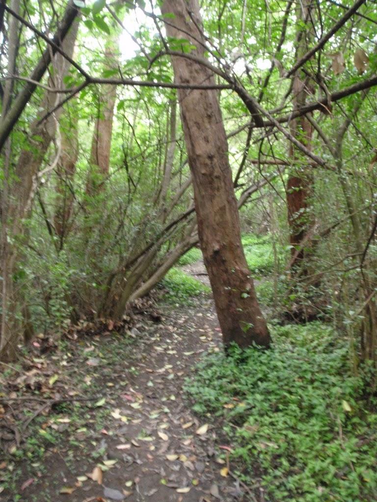 following the lagoon bushtrack