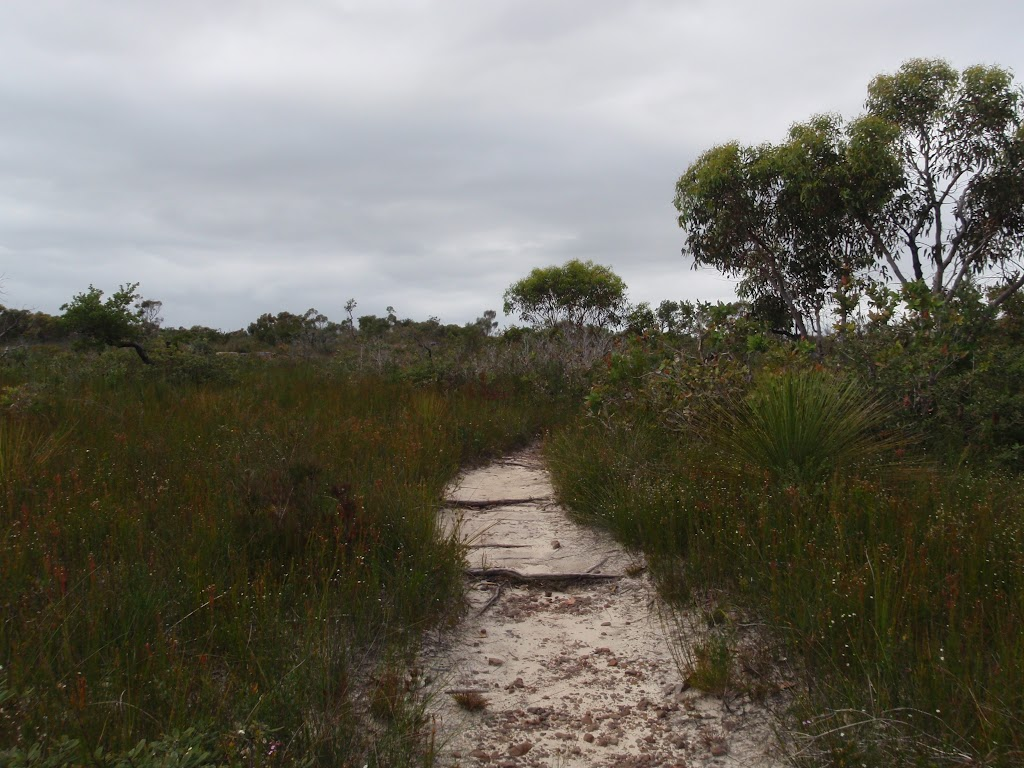 Track to Aboriginal Engraving (90477)
