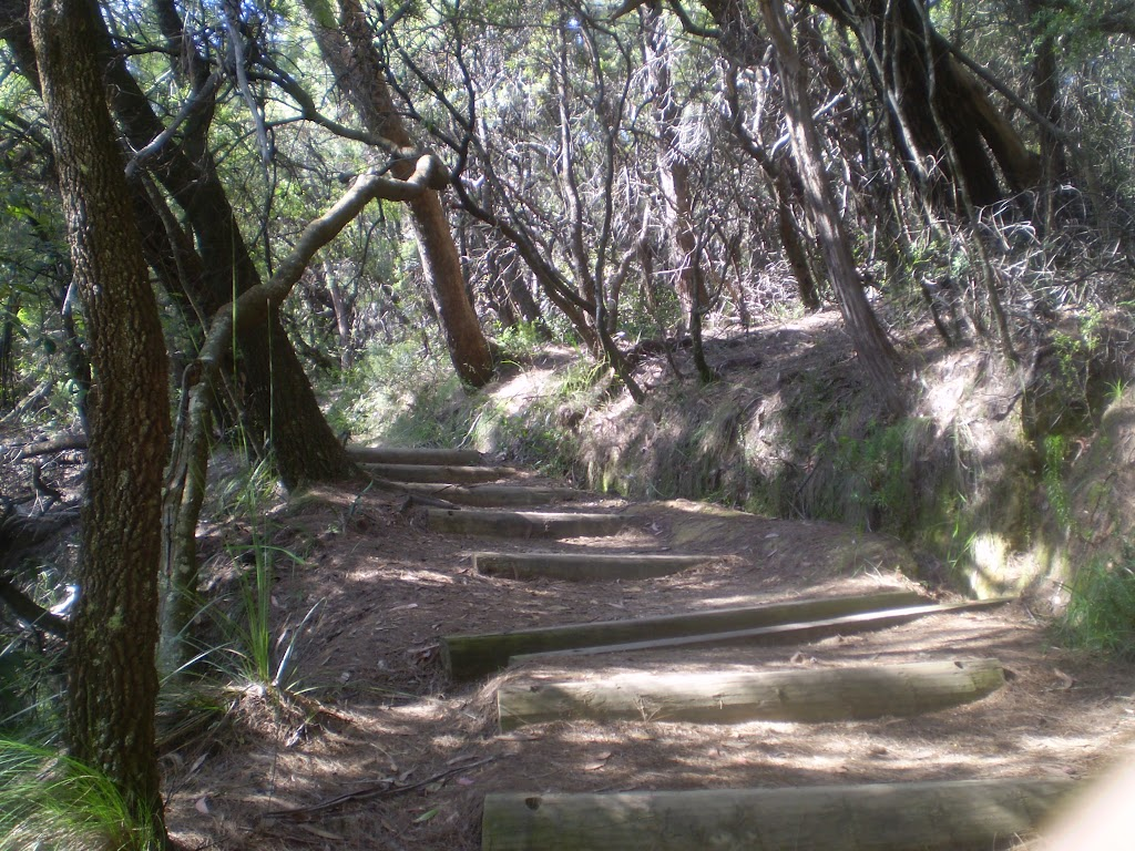 Going down to Banksia Lookout (9128)