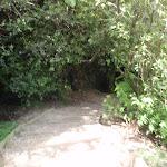 Prince Henry Cliff walk near Katoomba Cascades