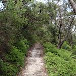 Track through low ferns