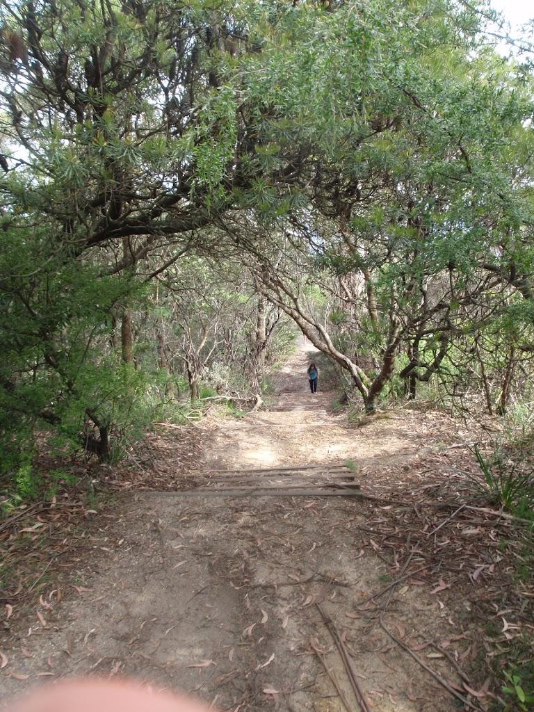 Gordon Falls Lookout track