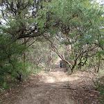 Gordon Falls Lookout track (93712)