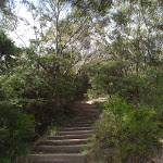 Steps on Gordon Falls Lookout track (93742)