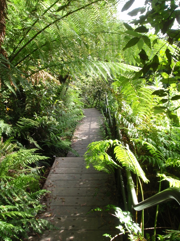 Leura Creek Walkway
