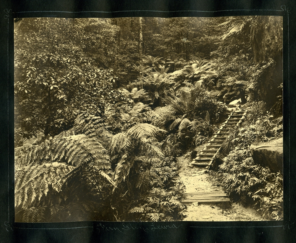Fern Glen Leura 1935  Harry Phillips (93874)