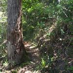 Track to Top Vera Falls (94423)