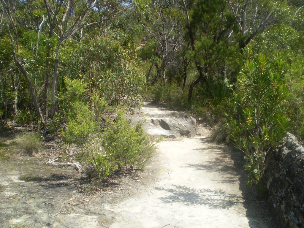 Track to Copelands Lookout (9452)