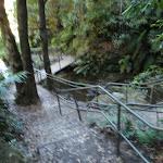 Leura Cascades Walkway (95002)