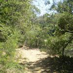 Prince Henry Cliff Walk (9503)