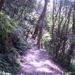 Round Walk track (9545)