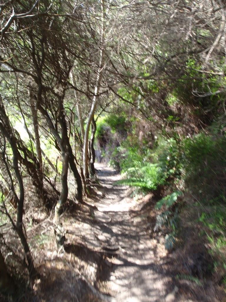 Track through Blue Mountains NP