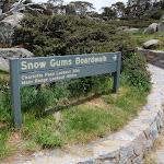 Start of Snow Gums Boardwalk (96853)