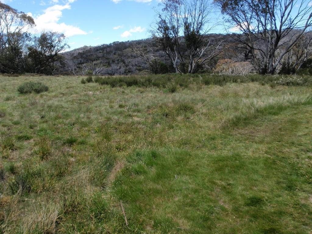 Open alpine grass land