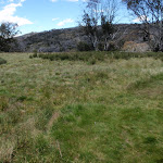 Open alpine grass land (97246)