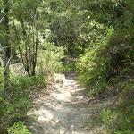 Round Walk track (9734)