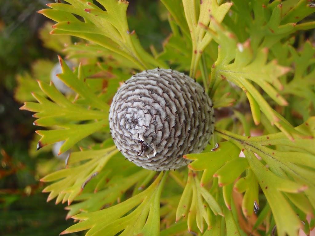 Seed pod in heath