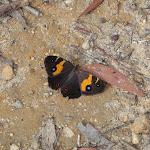 Butterfly (98489)