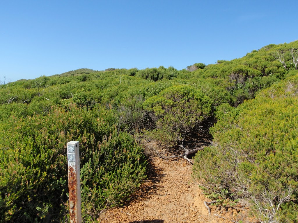 Track into the heath on Jibbon Head (98945)
